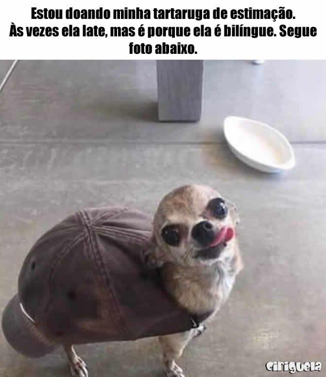 Doando tartaruga de estimação - Ciriguela